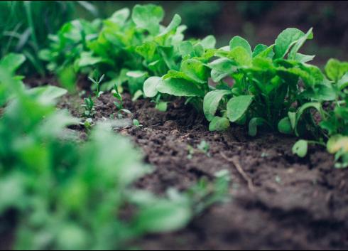 《广东省土壤污染防治2018年工作方案》发布
